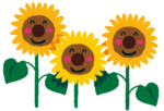 flower_sunflower.png